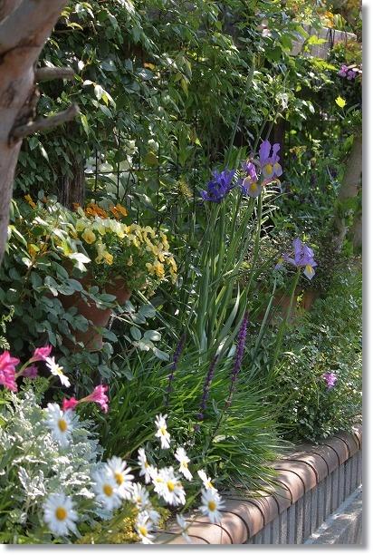 花壇全景 1