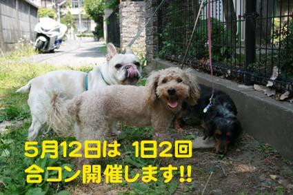 01_20130510114632.jpg