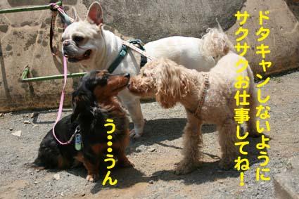 1_20130530135149.jpg