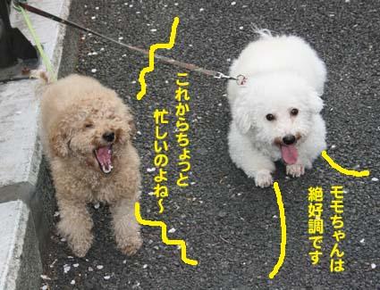 2_20130524060351.jpg
