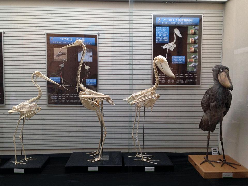 3 IMG_0371鳥骨