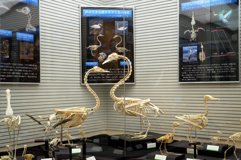 4 D70_5256鳥骨