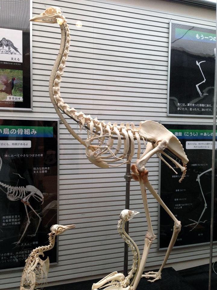 6 IMG_0373鳥骨