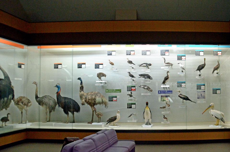 8 D70_5236鳥骨