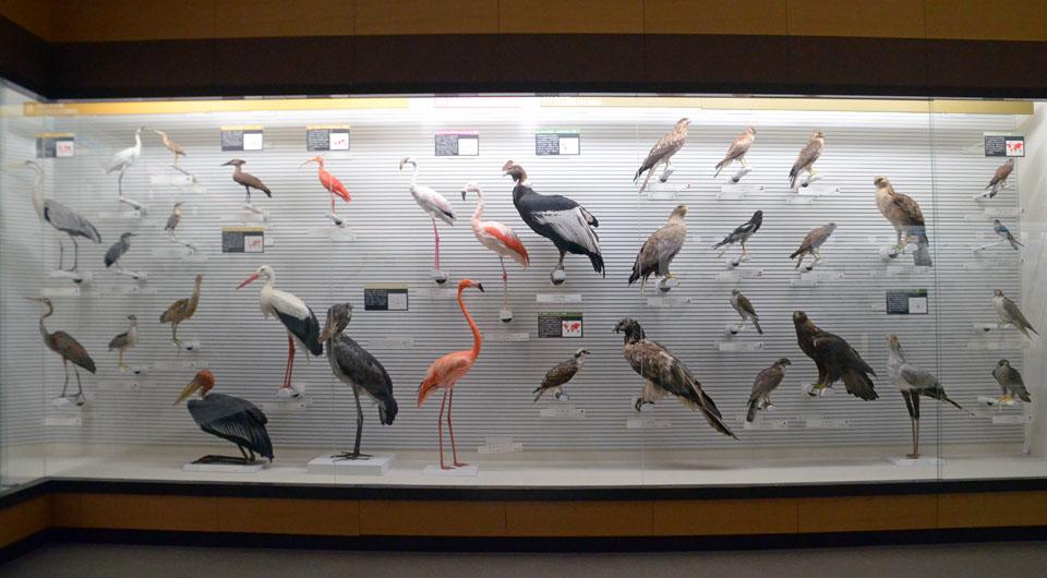 9 D70_5234鳥骨