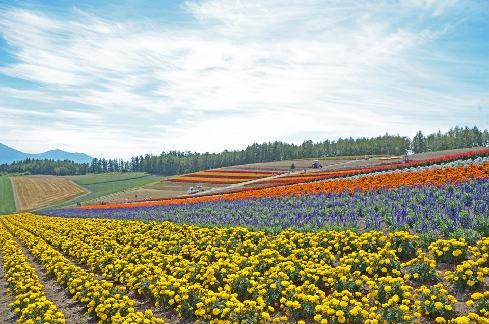 D70_6349色彩の丘
