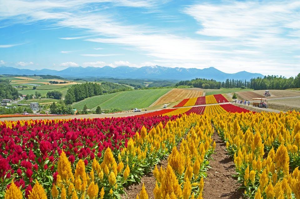 D70_6359色彩の丘