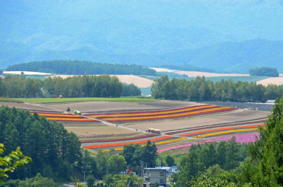 D70_6397色彩の丘