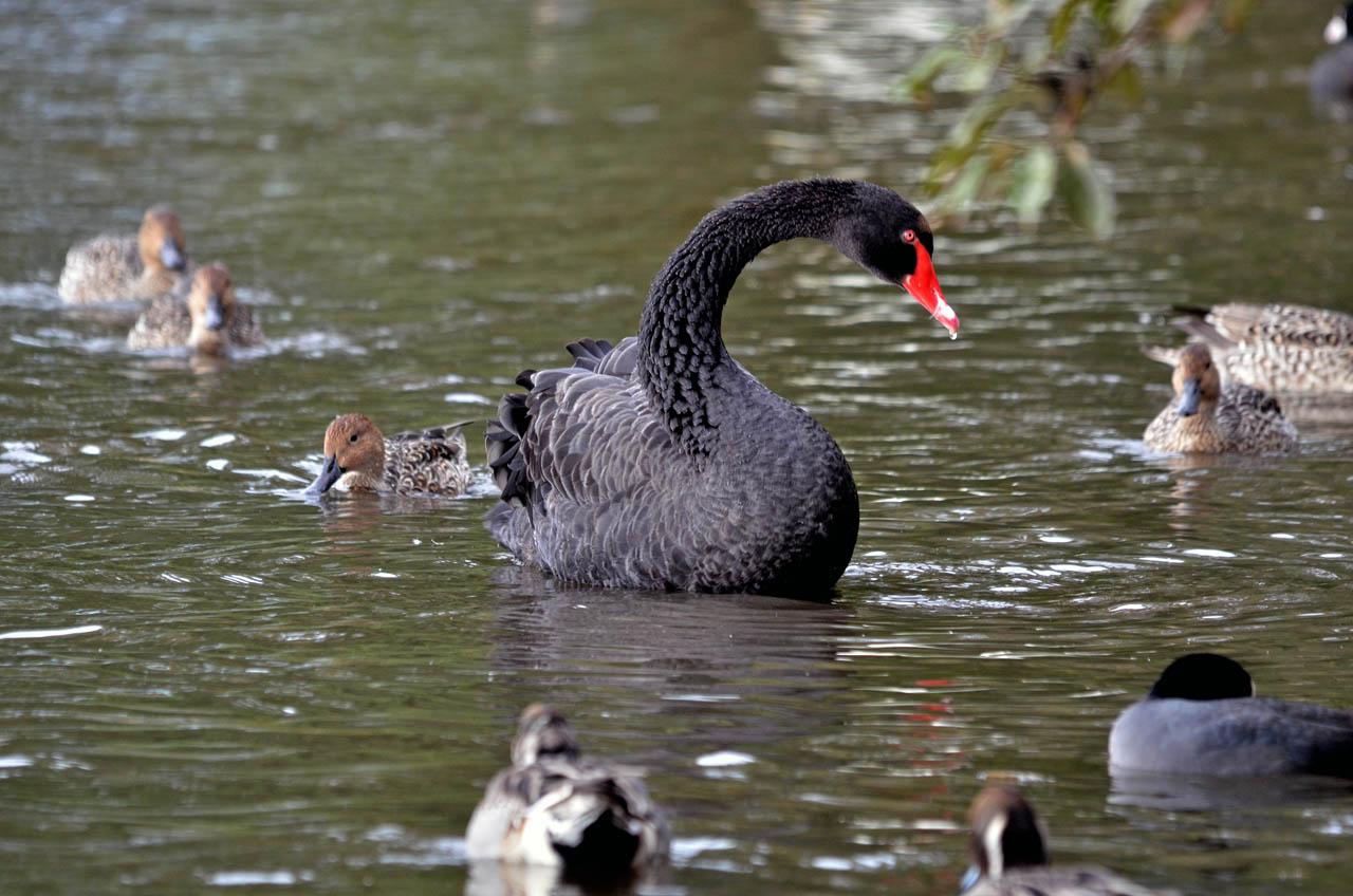 D70_6633黒鳥