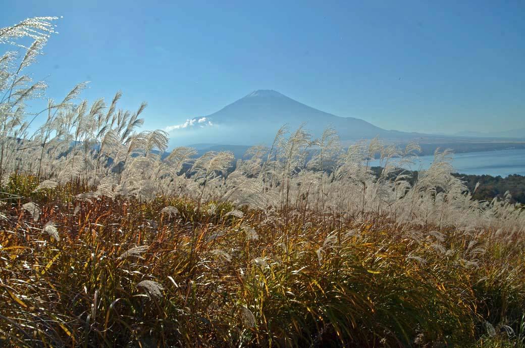 D70_5974ススキ山中湖