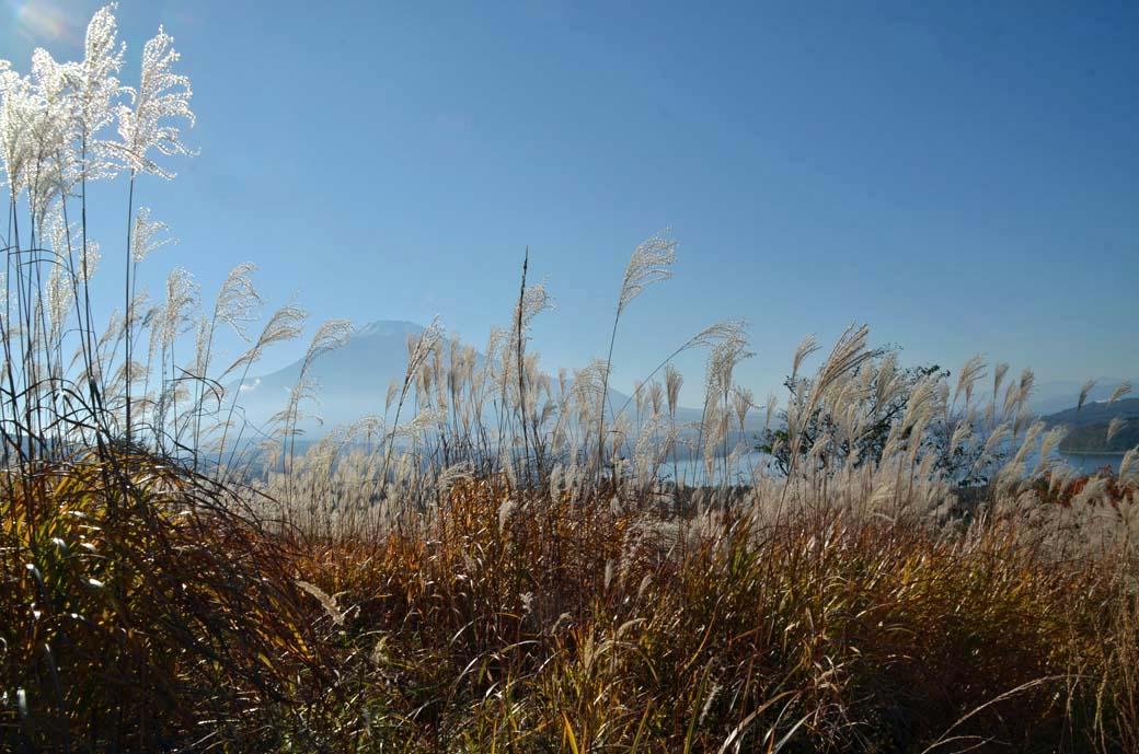 D70_5947ススキ山中湖