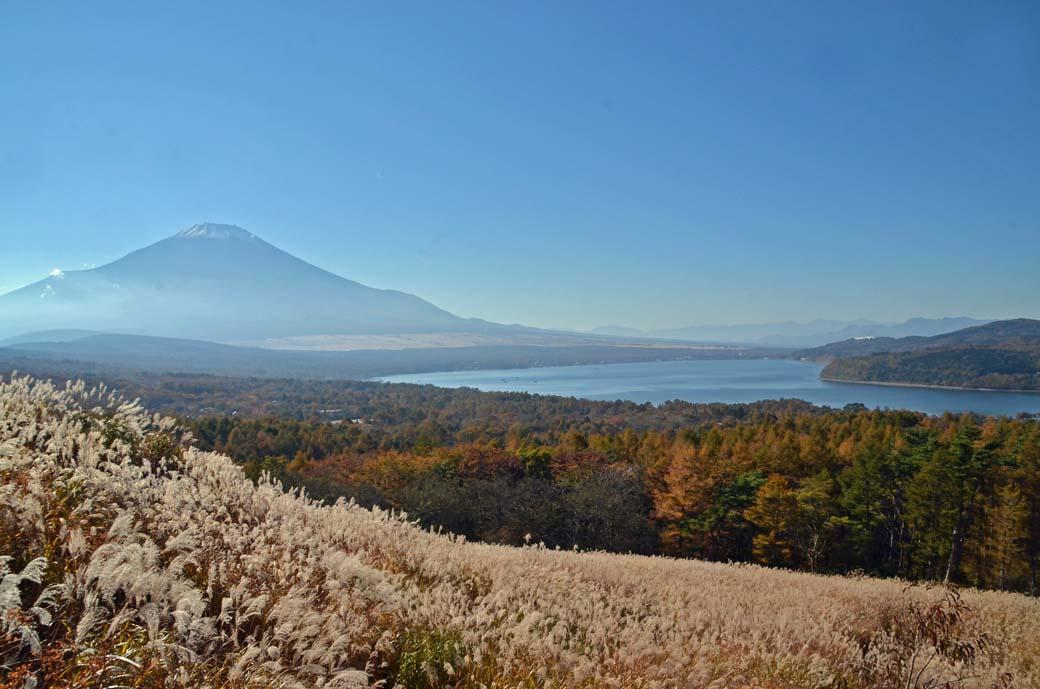 D70_5927ススキ山中湖
