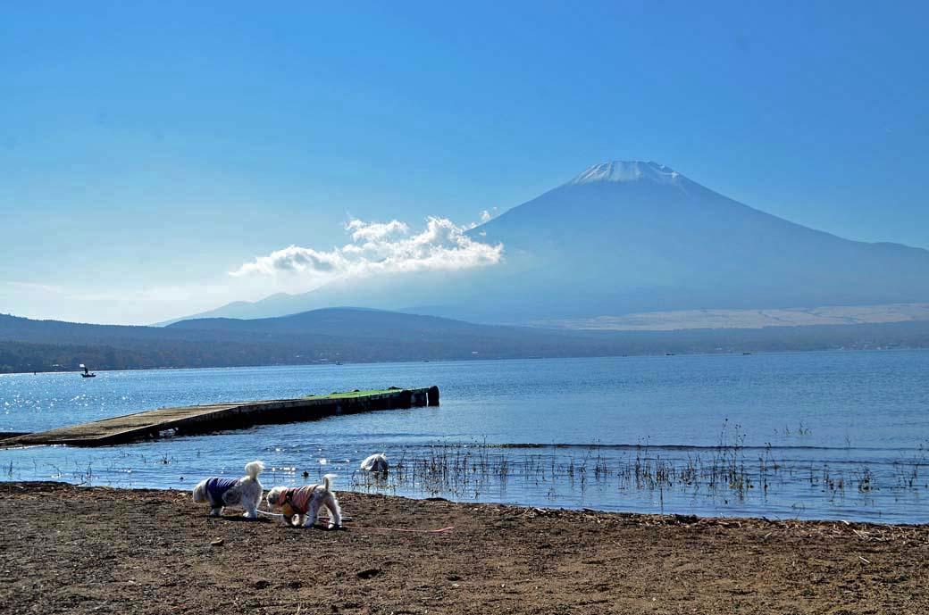 D70_5905ススキ山中湖