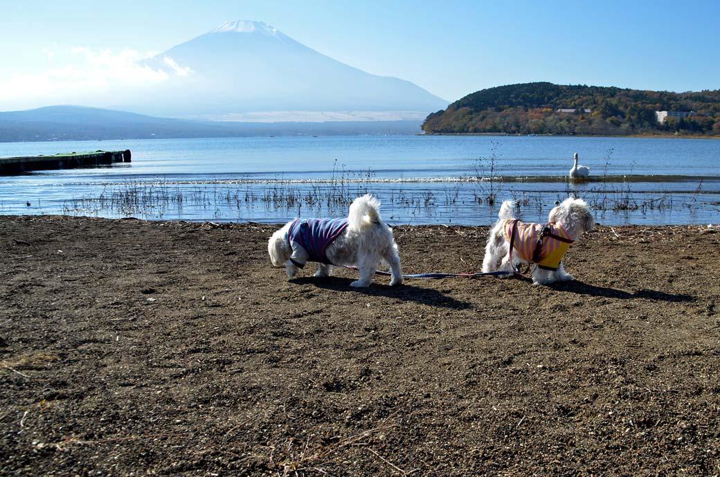 D70_5889ススキ山中湖