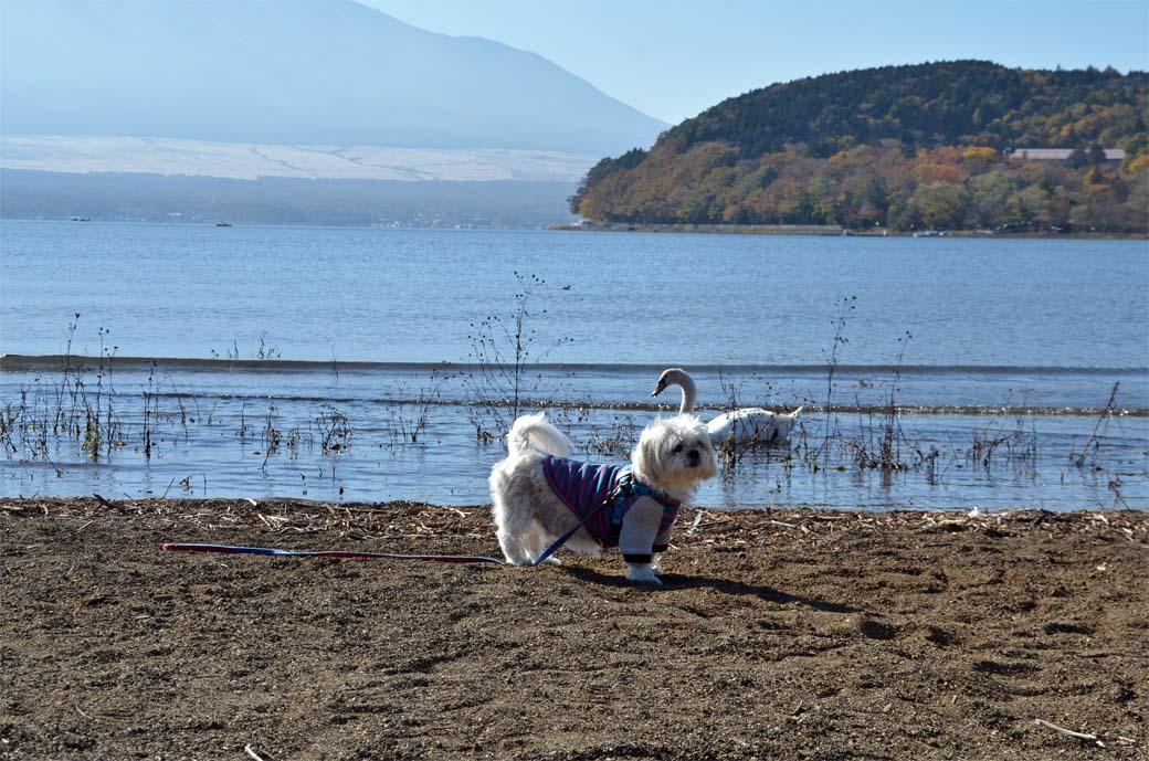 D70_5893ススキ山中湖