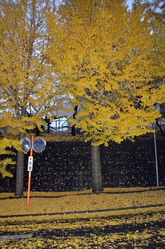 D70_8797黄色の秋