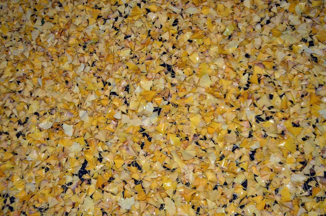 D70_8795黄色の秋