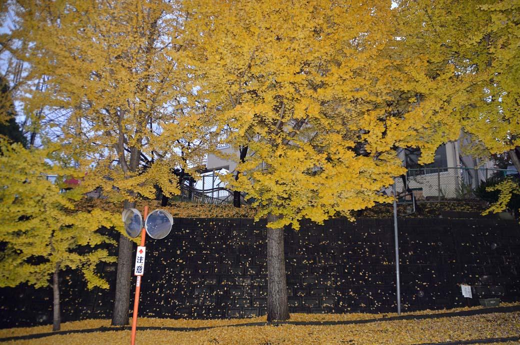 D70_8790黄色の秋