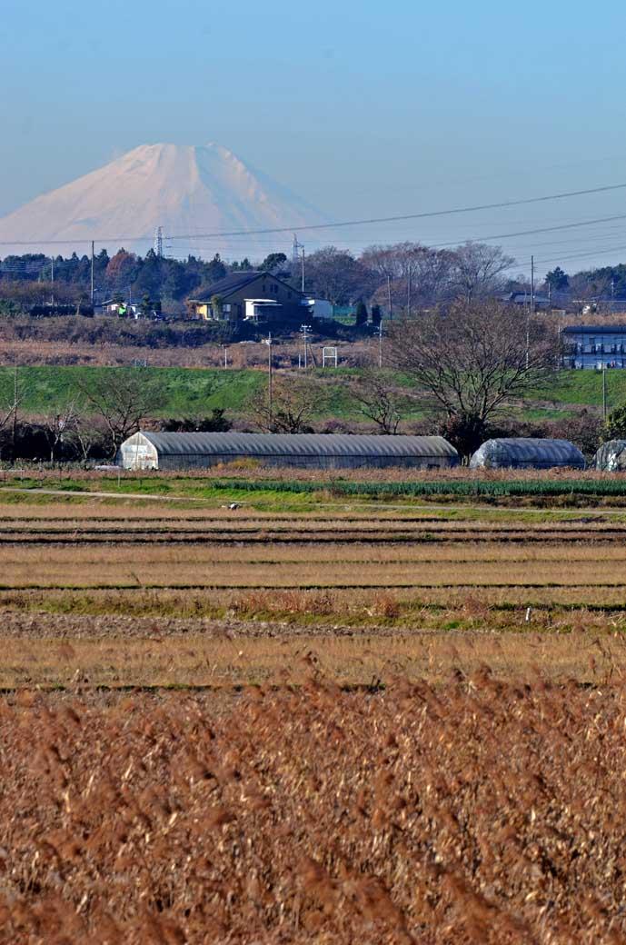 北新田からの富士山