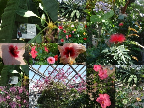 咲くやこの花館2