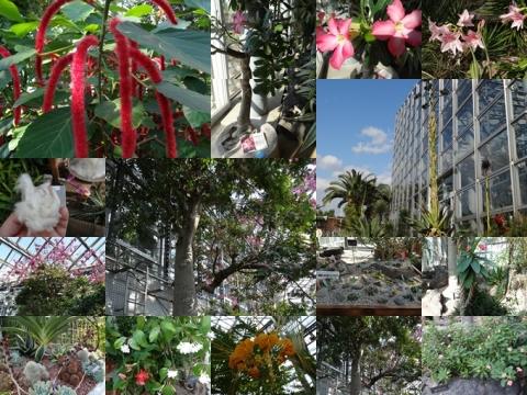 咲くやこの花館3