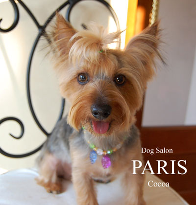 cocoa-130504.jpg