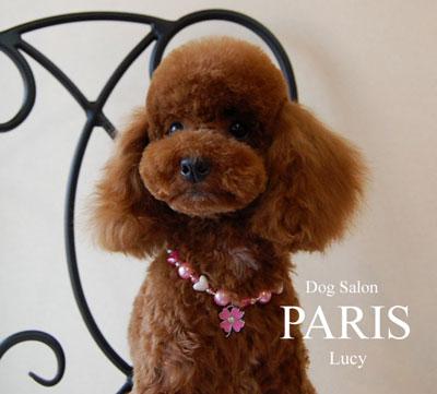 lucy-130429.jpg