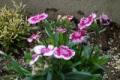 初冬にも咲く花