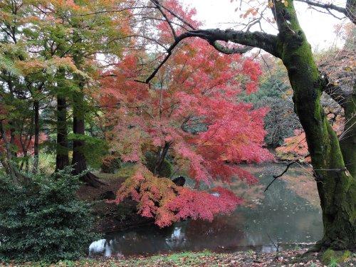 7御苑紅葉池