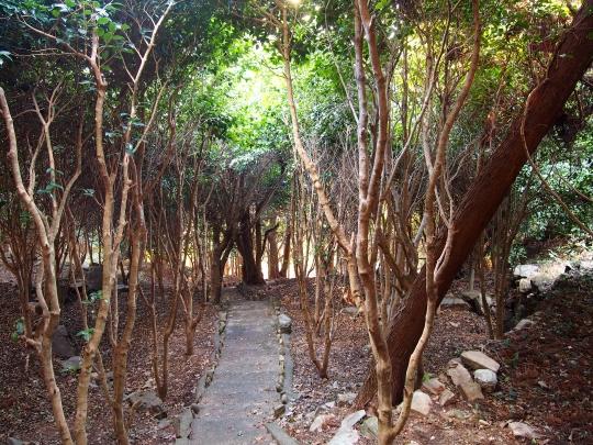 9西平椿公園