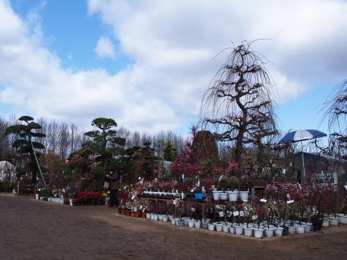 植木市 戸島
