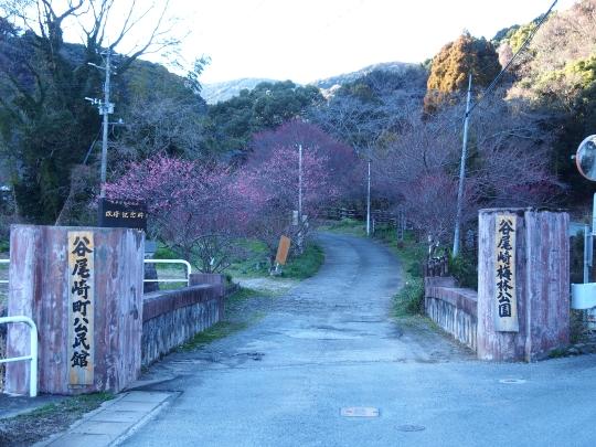 谷尾崎梅園 (32)