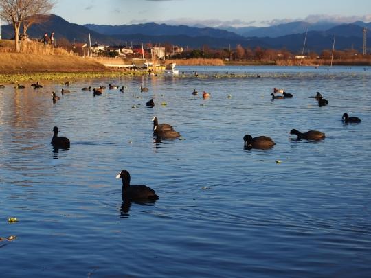 1江津湖 (3)