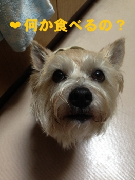 3_20140103104256110.jpg
