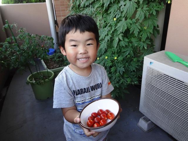 ミニトマトを取ってにっこりの陸ちゃん