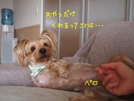 P4150120.jpg