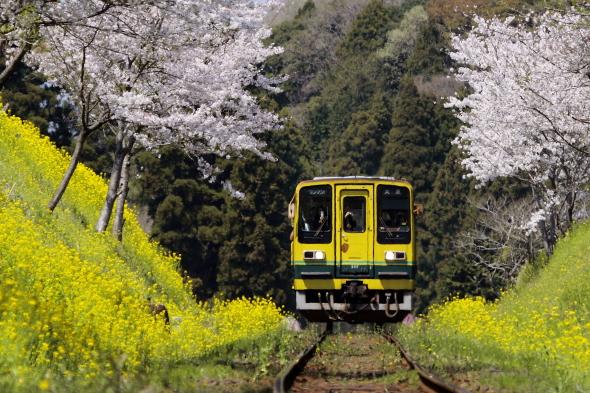 2009年4月上旬 いすみ鉄道 総元~西畑