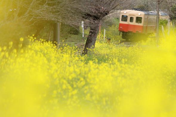 2010年3月下旬 小湊鉄道 里見~飯給