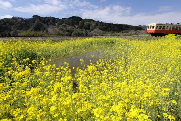 2010年3月下旬 小湊鉄道 上総大久保~養老渓谷