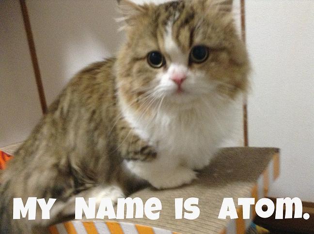 I am Atom