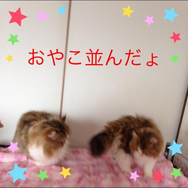 moblog_dbe7dcba.jpg