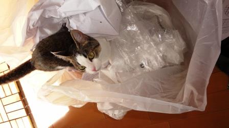 ゴミ袋嬉しいニャン