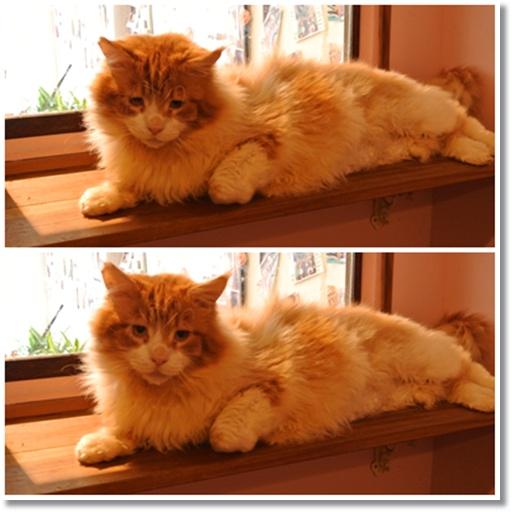cats2_20141121164832023.jpg