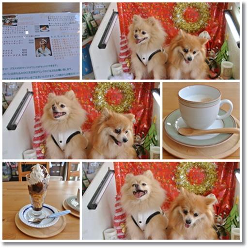 cats3_20141121170813008.jpg