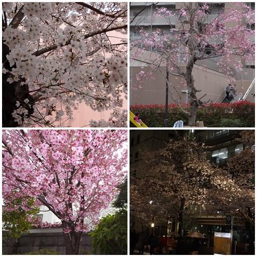 201303 ご近所と八重洲の夜桜