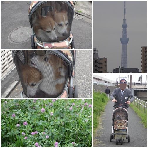 20130420 朝んぽ