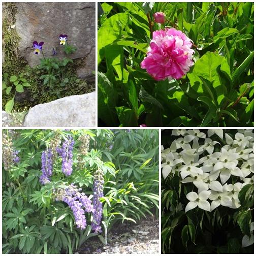 201306 大内宿の花