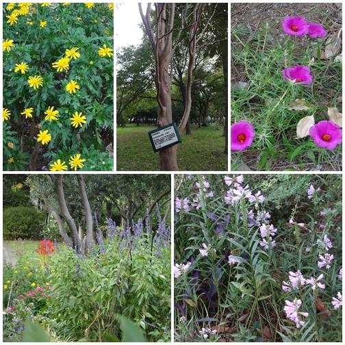 20130922 木場公園の花