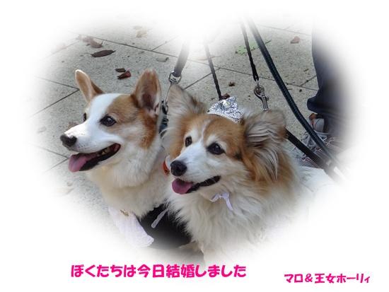 20131012 オバコギ秋合宿DSC04207