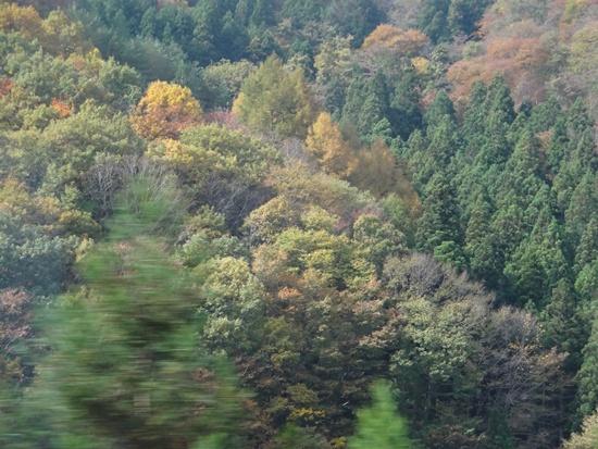 20131102 レジーナの森DSC04557